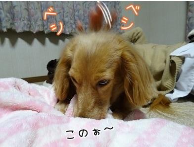 kinako6529.jpg