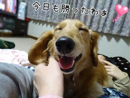 kinako6533.jpg