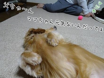kinako6536.jpg