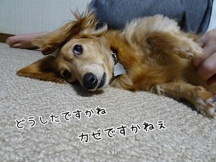 kinako6537.jpg
