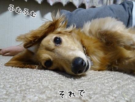 kinako6538.jpg