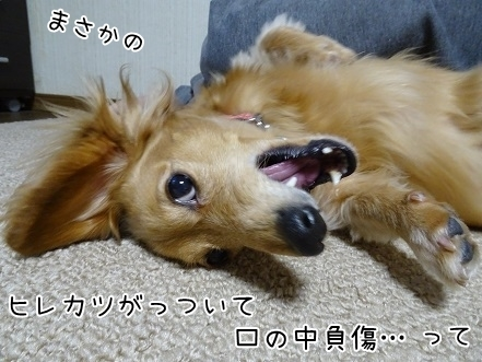 kinako6539.jpg