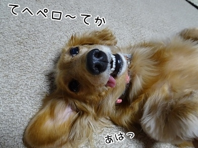 kinako6546.jpg