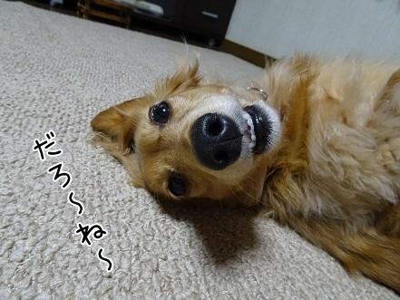 kinako6557.jpg