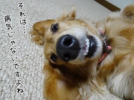 kinako6558.jpg