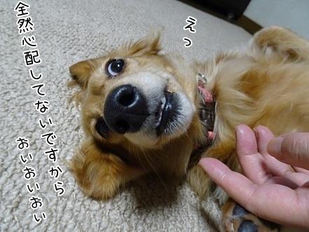 kinako6559.jpg