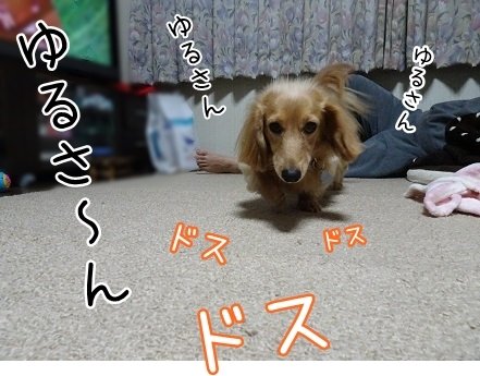 kinako6570.jpg