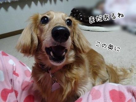 kinako6576.jpg