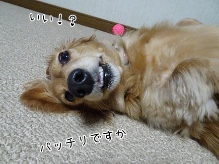 kinako6582.jpg