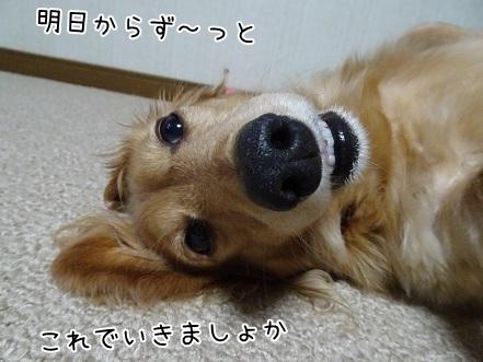 kinako6583.jpg