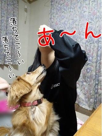 kinako6598.jpg