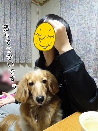 kinako6600.jpg
