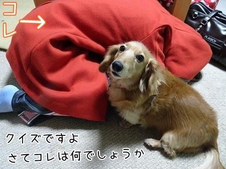 kinako6603.jpg