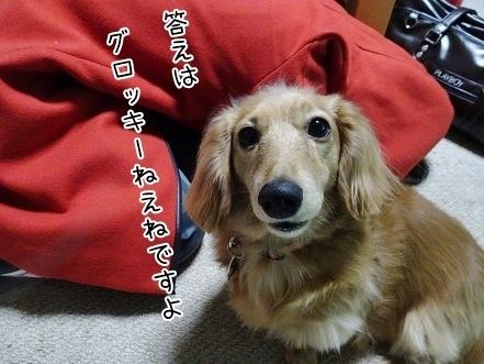 kinako6604.jpg