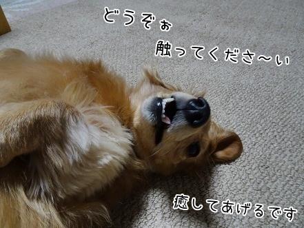 kinako6615.jpg