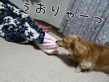 kinako6622.jpg