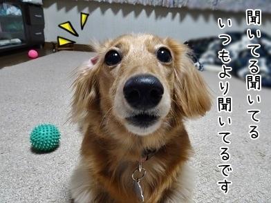 kinako6623.jpg