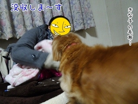 kinako6627.jpg