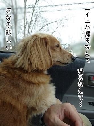 kinako6633.jpg