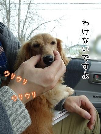 kinako6634.jpg
