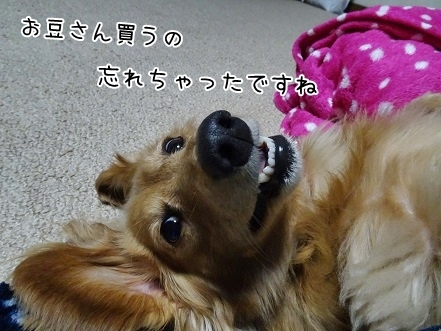 kinako6638.jpg