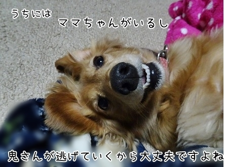 kinako6640.jpg