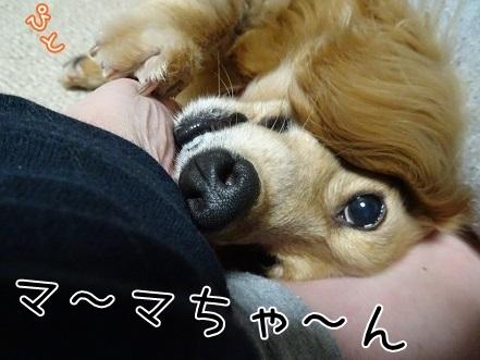 kinako6648.jpg