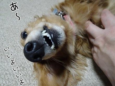 kinako6650.jpg