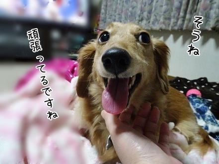 kinako6663.jpg