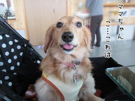 kinako6671.jpg