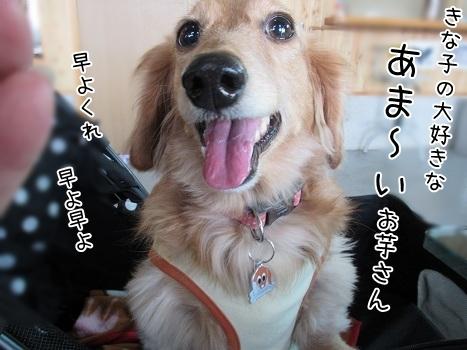 kinako6672.jpg