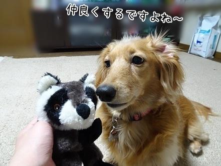 kinako6676.jpg