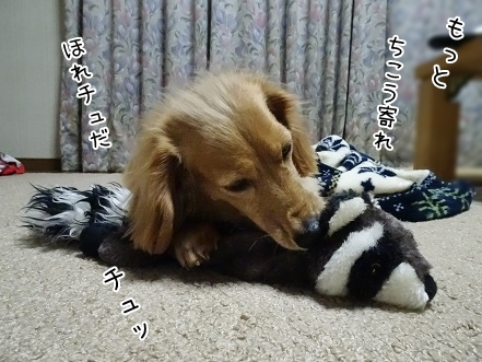 kinako6679.jpg