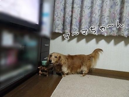 kinako6687.jpg