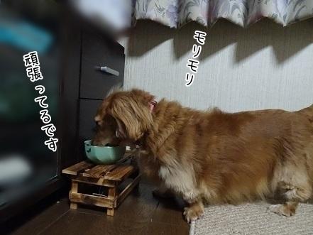 kinako6688.jpg