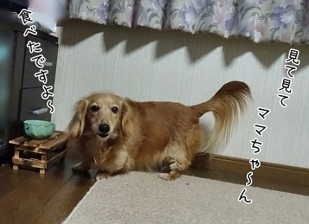 kinako6689.jpg