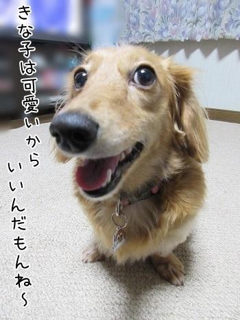 kinako6690.jpg