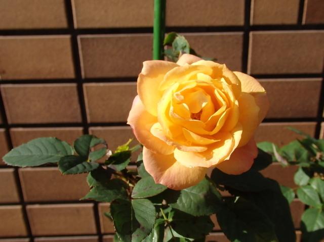 2015-01-0420161205_14.jpg