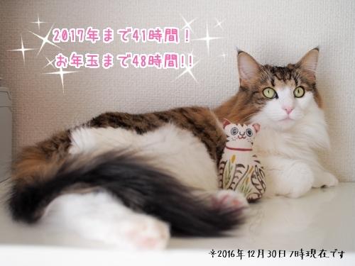 PA260027_.jpg