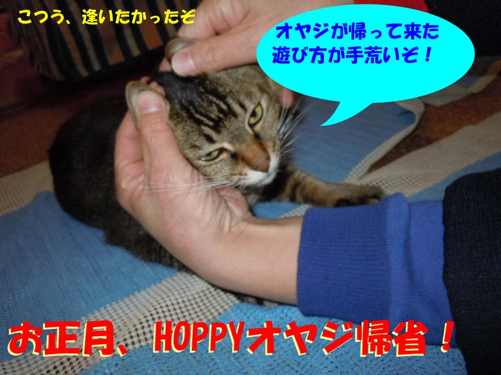 HOPPY17-1