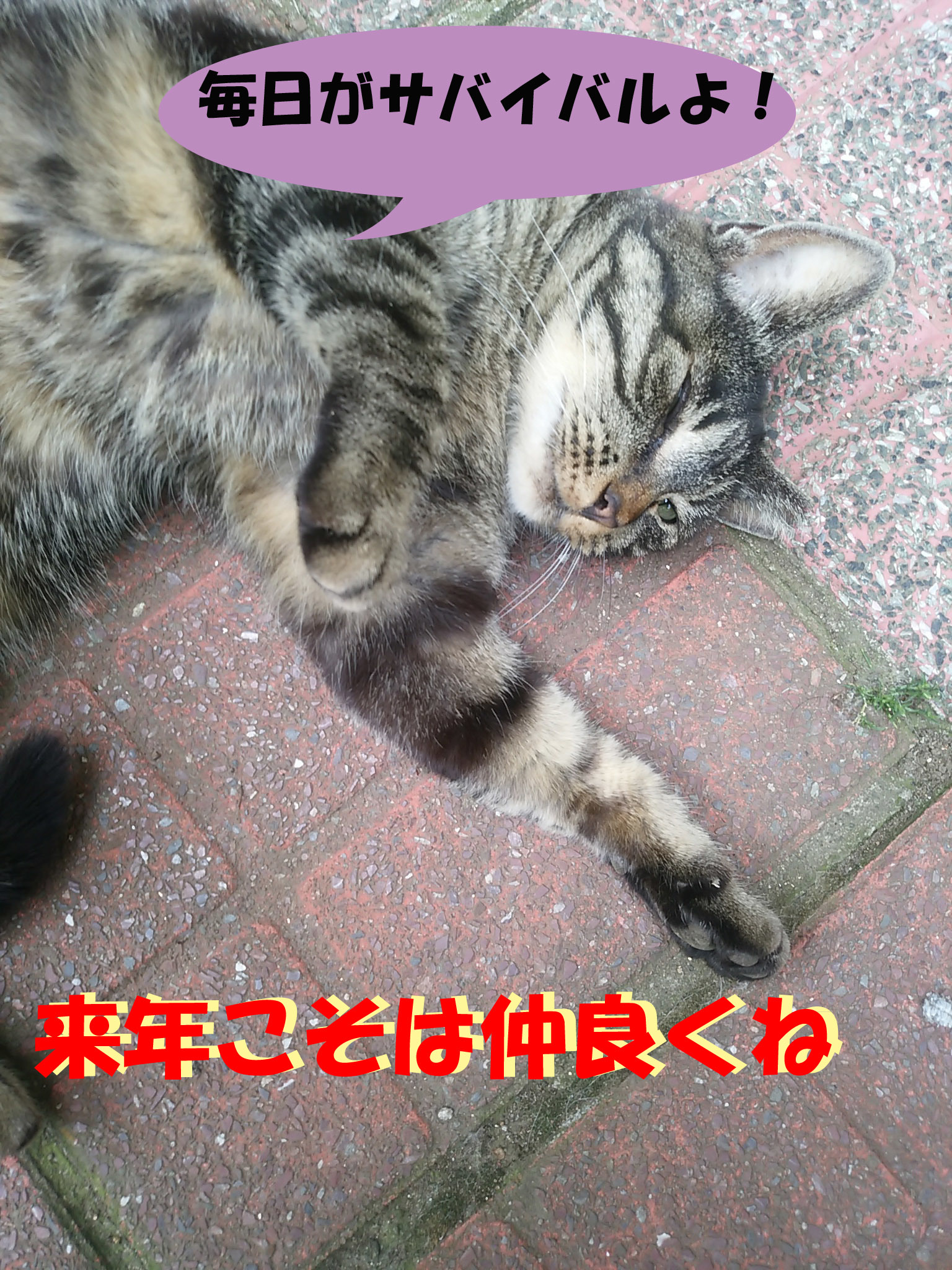 IMG_20150522_133506.jpg