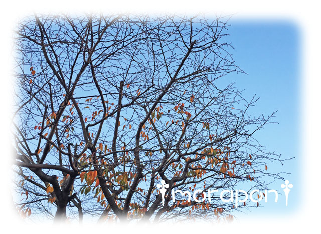 161125 冬晴れ散歩-1