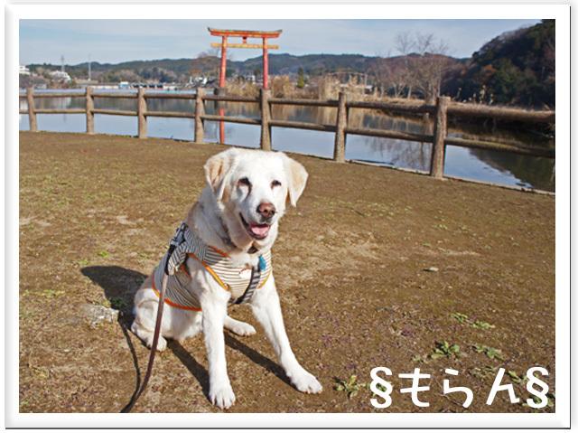 161220 亀山湖-1