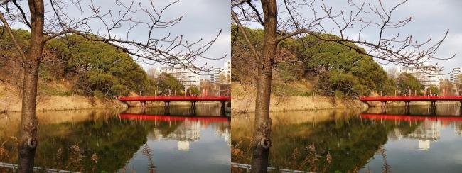 天王寺公園 茶臼山 和気橋③(平行法)