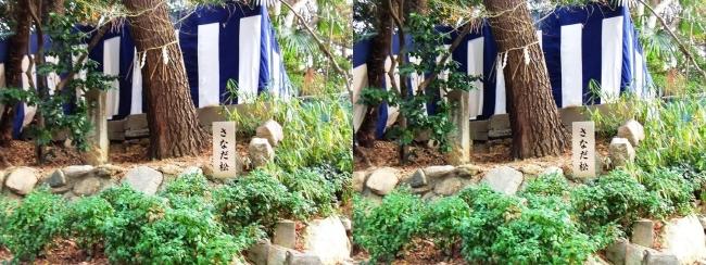 安居神社 さなだ松(平行法)