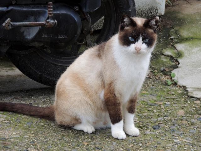N8687島猫