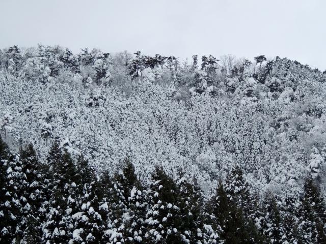 N8843雪と樹木