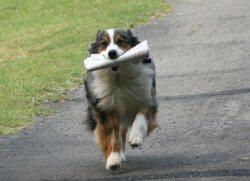01 250 dog news