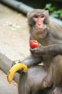 1a 200 a banana an apple