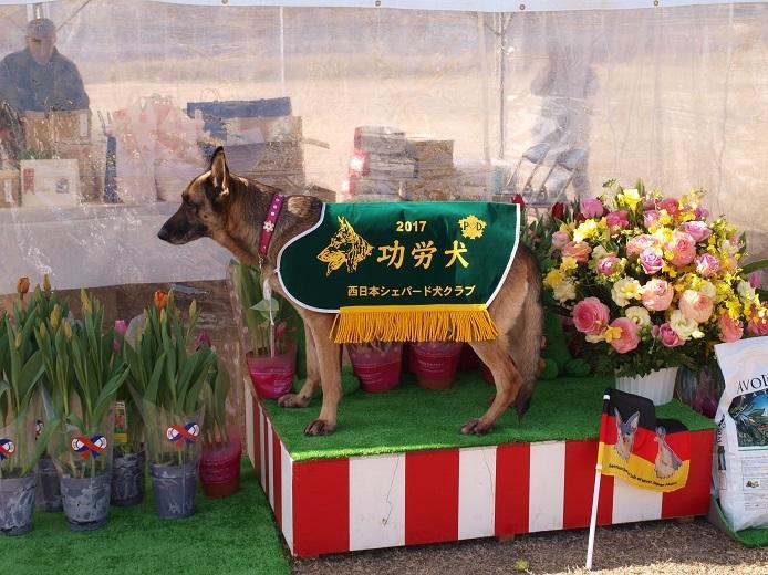 功労犬0129
